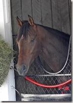 Horse Orb bio