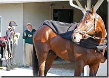 Horse Orb-pics