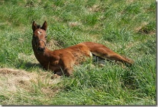 horse Orb as a foal